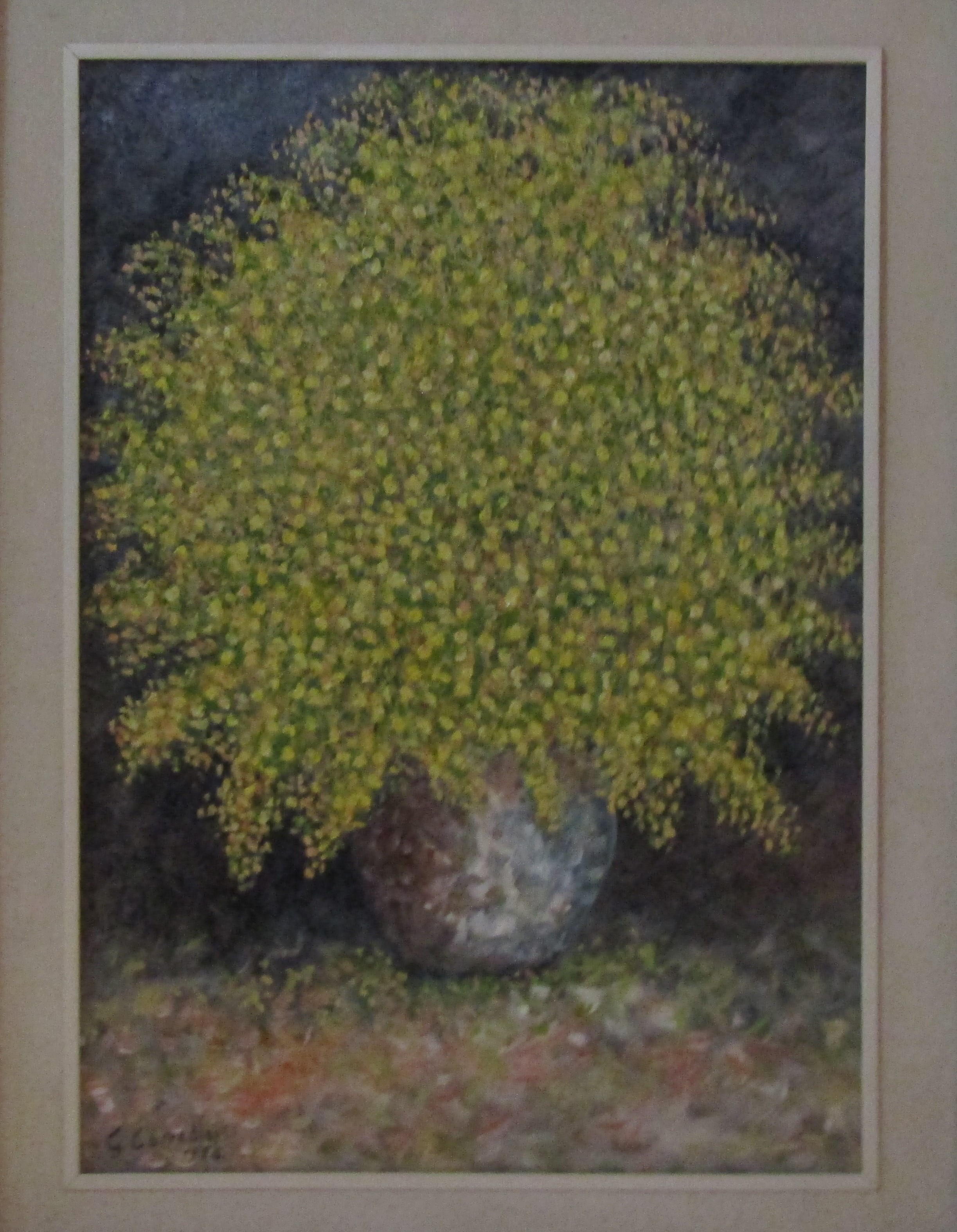 Le Mimose